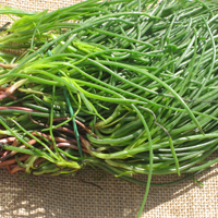 Picture of fresh monks beard